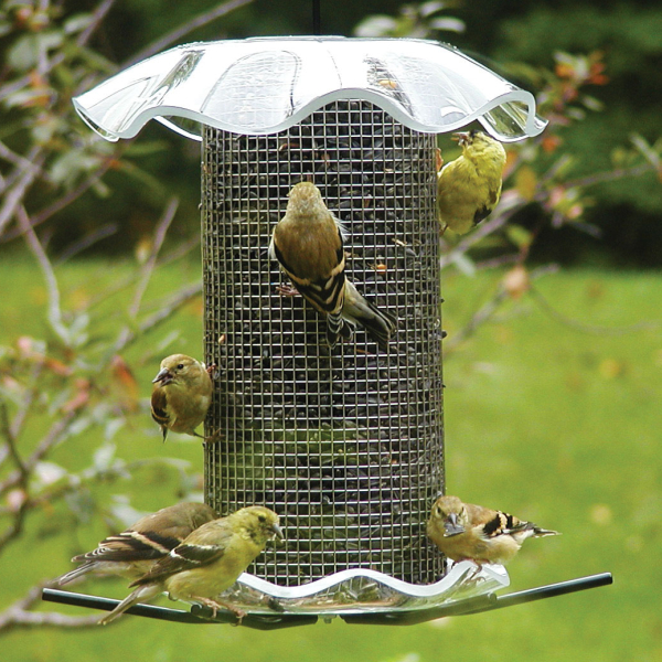 Backyard Bird Sanctuary: Forever Seed Feeder 3 Quart Clear, Quality Bird Seed