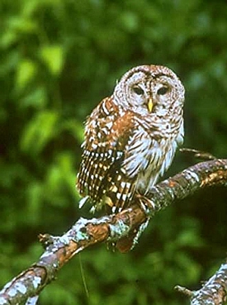 Conservation Barred Owl House
