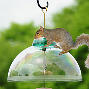 Squirrel Baffles & Weather Guards