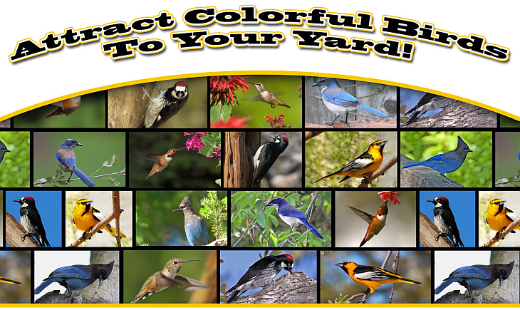 Attract Colorful Songbirds To Your Yard