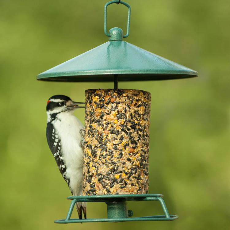 classic seed log feeder