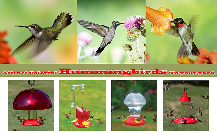 Attract Colorful Hummingbirds To Your Yard!