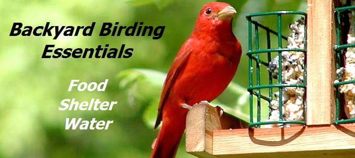 Backyard Birding Essentials - Food, Shelter, Water
