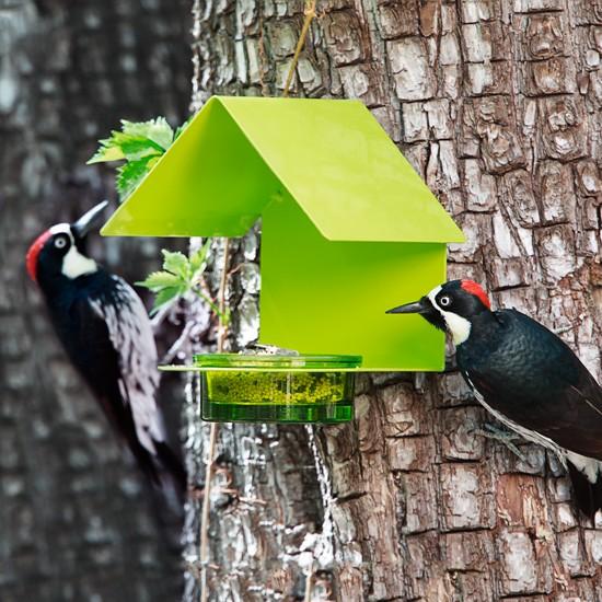 Fence/Post Bird Feeder Lime
