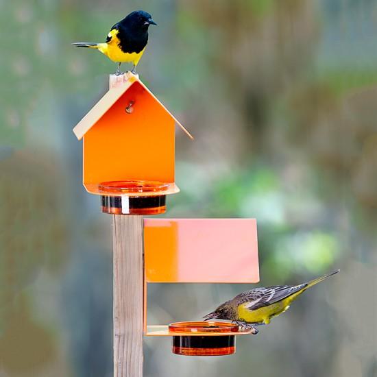 Fence/Post Bird Feeder Orange