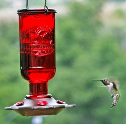 Elixir Hummingbird Feeder