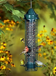 Squirrel Buster Classic Squirrel Proof Bird Feeder