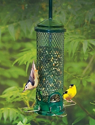 Squirrel Buster Mini Squirrel Proof Bird Feeder