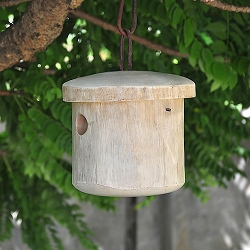 Mango Tree Primitive White Bird House
