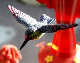 Hummingbird Fly Through Window Magnet