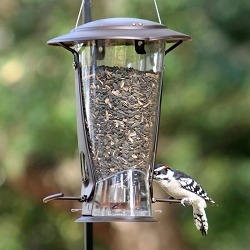 Squirrel X-2 Squirrel Resistant Bird Feeder