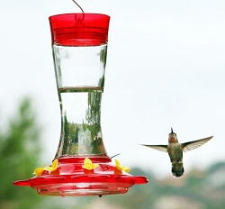 Garnet 20 oz. Hummingbird Feeder