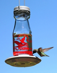 Jersey Milk Bottle Hummingbird Feeder