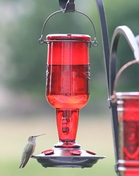 Jug 23 oz. Hummingbird Feeder