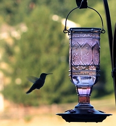 Amethyst Jewel 20 oz. Hummingbird Feeder