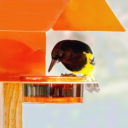 Fence/Post Bird Feeder Orange