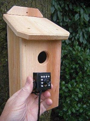 Northwoods Cedar Birdhouse with High Definition (HD) Hawk Eye Nature Cam