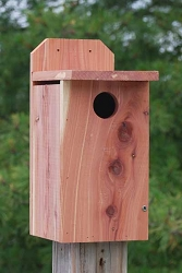 Premium Large Cedar Bluebird House