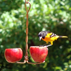Double Apple Feeder