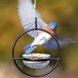Sphere Hanger Mealworm Feeder Clear Set of 6
