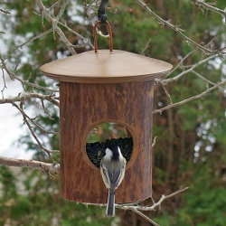 Mango Tree Natural Fly-Through Feeder