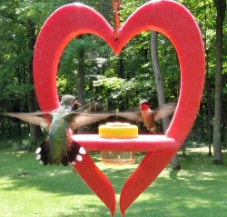 Heart Dots Hummingbird Feeder