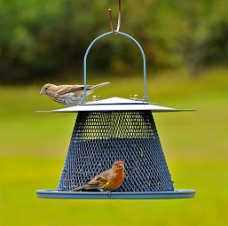 NO/NO Blue Bell Bird Feeder