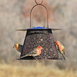 NO/NO Original Bronze Bird Feeder with Extended Roof