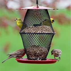 NO/NO Sunflower Lantern with Tray Bird Feeder