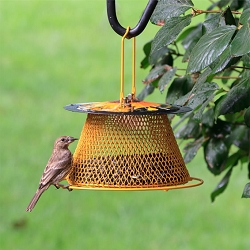 NO/NO Designer Single Tier Bird Feeder