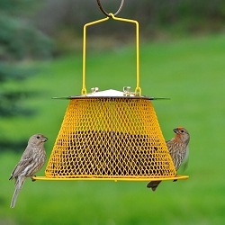NO/NO Sunflower Basket Bird Feeder