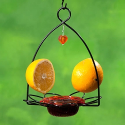 Oriole Flower Dish Feeder Set of 2