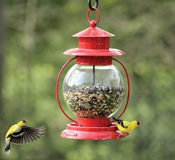 Chapelwood Red Lantern Seed Feeder