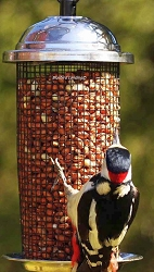 Chapelwood Kilo Shelled Peanut Feeder