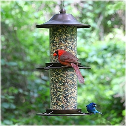 Panorama Bird Feeder