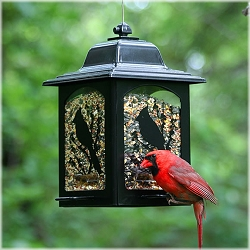 Birds & Berries Lantern Bird Feeder