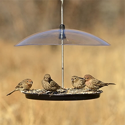 Hanging Adjustable Platform Bird Feeder