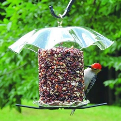 Seed Cylinder Feeder with Clear Weather Guard