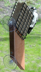 Suet Window Feeder