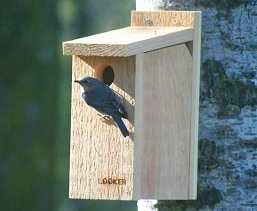 Bluebird View Thru Bird House
