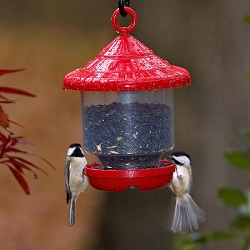 Clingers Only Bird Feeder Red