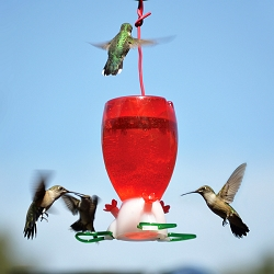 Big Red Hummingbird Feeder Set of 2