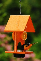 Rubicon Recycled Plastic Oriole Fruit and Jelly Feeder
