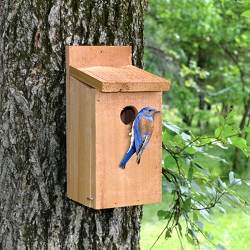 Town & Country Cedar Bluebird House