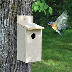Town & Country Economy Bluebird House