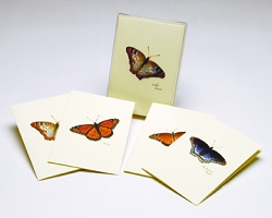 Butterfly II Boxed Notecard Assortment Set of 8