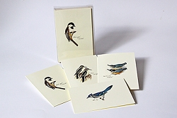 Peterson Birds III Boxed Notecard Assortment Set of 8