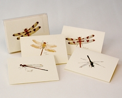 Dragonfly & Damselfly Boxed Notecard Assortment Set of 8