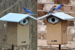 Birds Choice Recycled Ultimate Bluebird House Package w/Complete Pole Kit