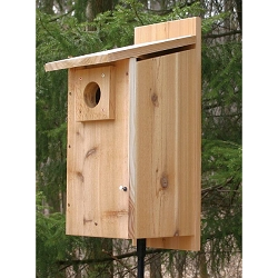 Select Cedar Rustic Western Bluebird House